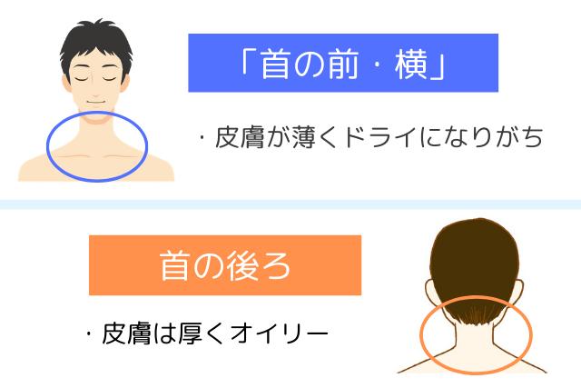 乾燥しやすい首のポイント