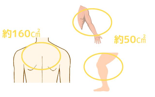 背部や四肢の皮脂腺量