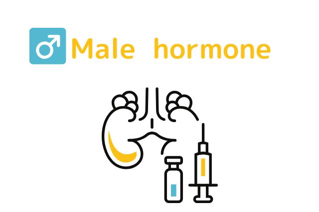 男性ホルモン