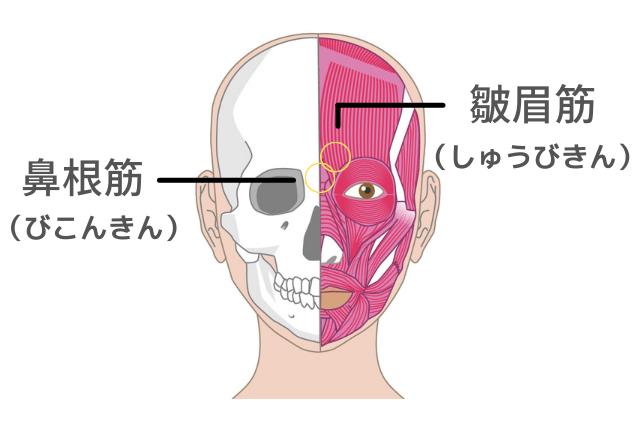 眉間のシワのポイントにもなる「鼻根筋」と「皺眉筋」