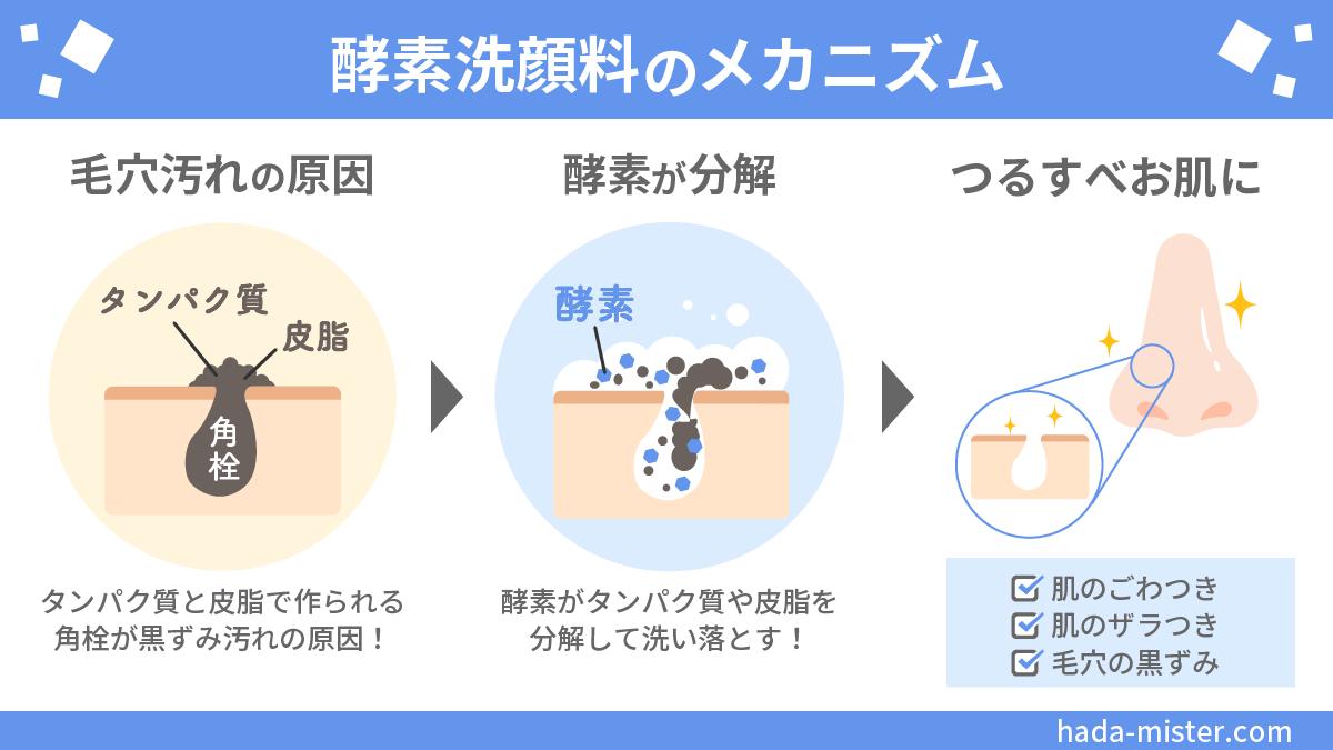 酵素洗顔料の効果・メカニズム